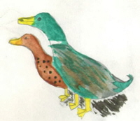 ducks painted by a child