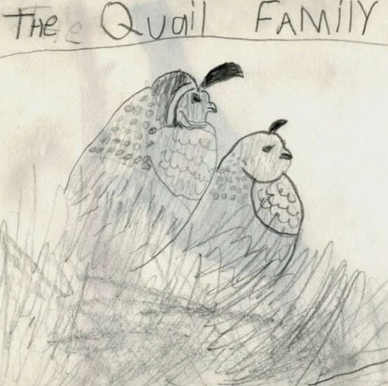 child's drawing of quail